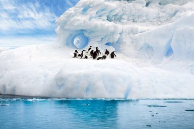 glacier, snow, penguins