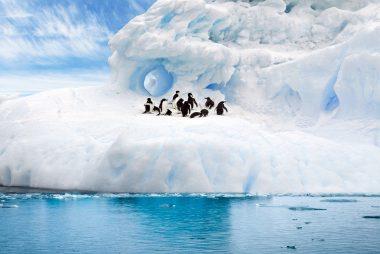 glacier, snow, penguins